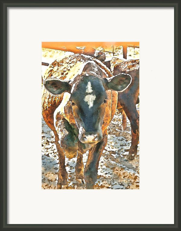 Cattle Round Up Framed Print By Author And Photographer Laura Wrede