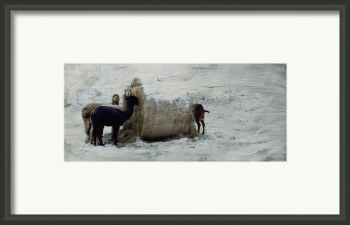 Caught In The Act Framed Print By Kathy Jennings