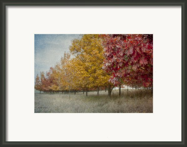 Changing Of The Seasons Framed Print By Jeff Swanson