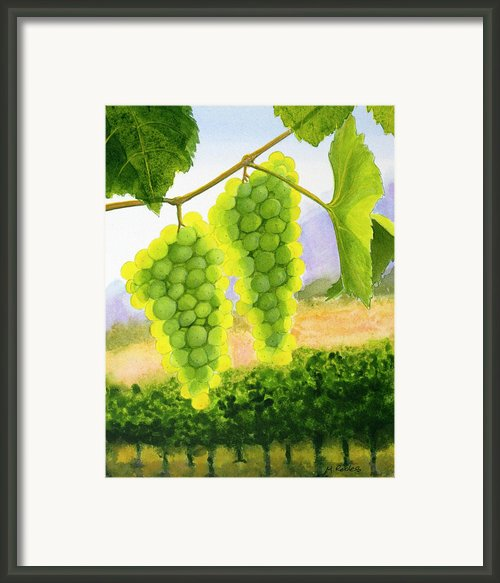 Chardonnay Grapes Framed Print By Mike Robles