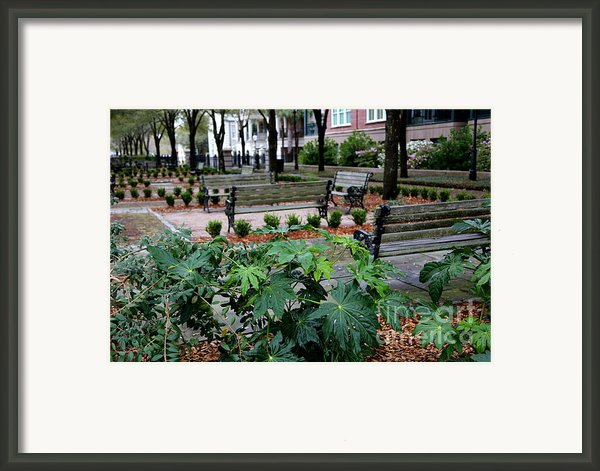 Charleston Waterfront Park Benches Framed Print By Carol Groenen