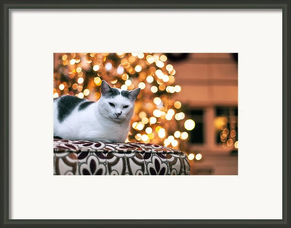 Charly And The Xmas Tree Framed Print By Edward Kreis
