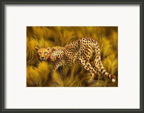 Cheetah Stare Framed Print By Carol Cavalaris