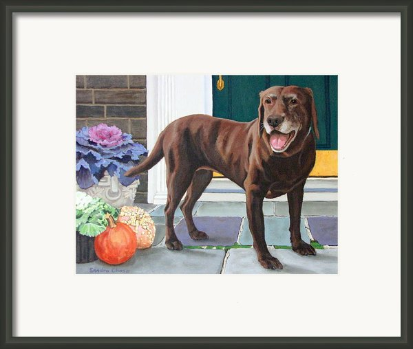 Chelsea At The Door Framed Print By Sandra Chase