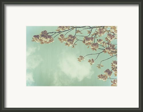 Cherry Blossom In Fulwood Park Framed Print By Georgia Fowler