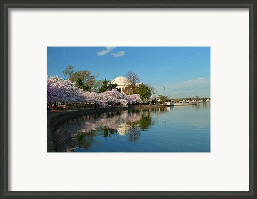 Cherry Blossoms 2013 - 041 Framed Print By Metro Dc Photography