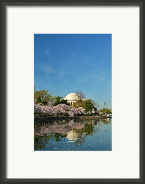 Cherry Blossoms 2013 - 098 Framed Print By Metro Dc Photography