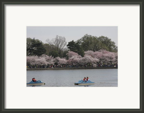 Cherry Blossoms - Washington Dc - 011315 Framed Print By Dc Photographer