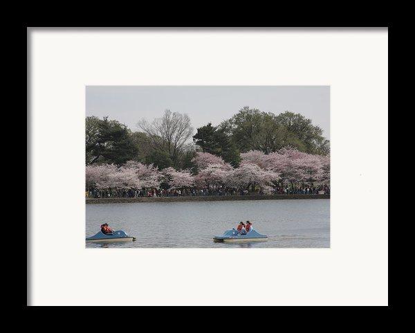 Cherry Blossoms - Washington Dc - 011315 Framed Print By Dc Photographer