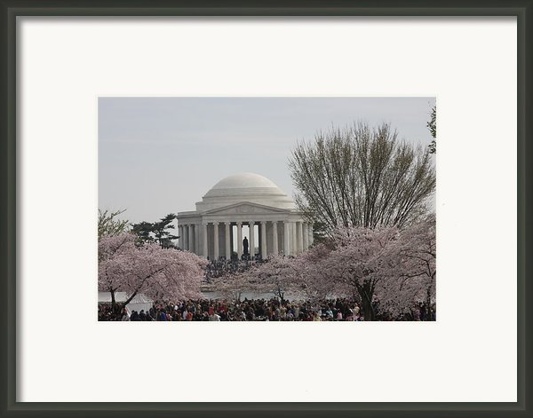 Cherry Blossoms With Jefferson Memorial - Washington Dc - 01132 Framed Print By Dc Photographer