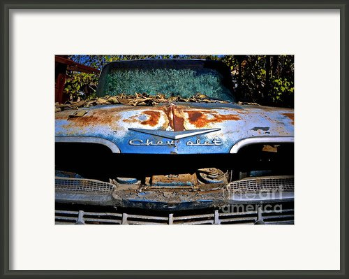 Chevrolet Picking Framed Print By Gwyn Newcombe