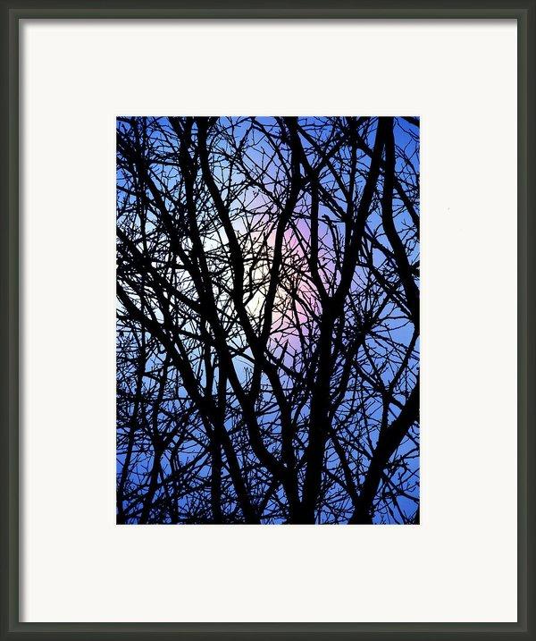 Chicago Winter Rainbow Framed Print By Todd Sherlock