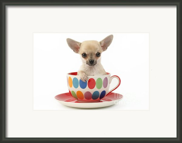 Chihuahua In Cup Dp684 Framed Print By Greg Cuddiford