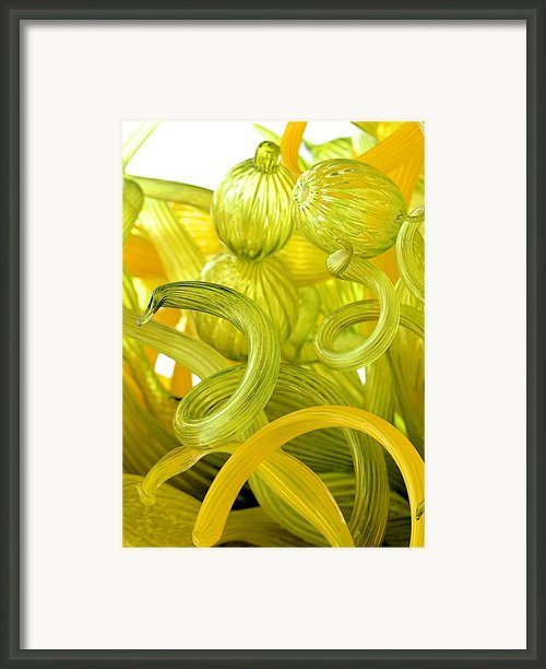 Chihuly In Yellow Framed Print By Elizabeth Budd