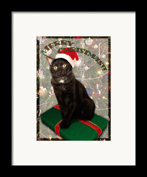 Christmas Cat Framed Print By Adam Romanowicz