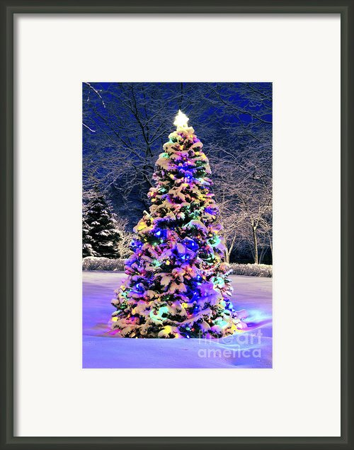 Christmas Tree In Snow Framed Print By Elena Elisseeva