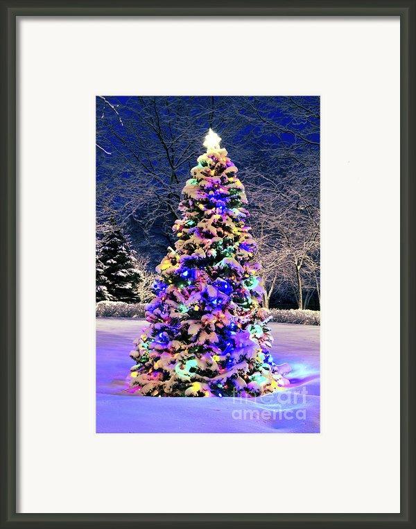 Christmas Tree In Snow Framed Print By Elena Elisseeva