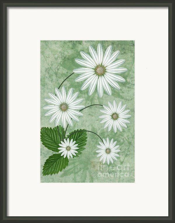 Cinco Framed Print By John Edwards