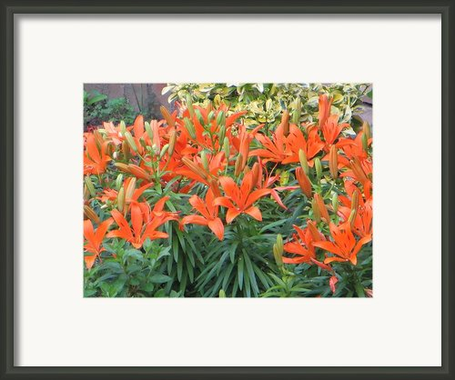 Cincture Of Lilies Framed Print By Sonali Gangane
