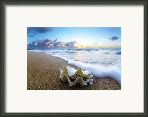 Clam Foam Framed Print By Sean Davey