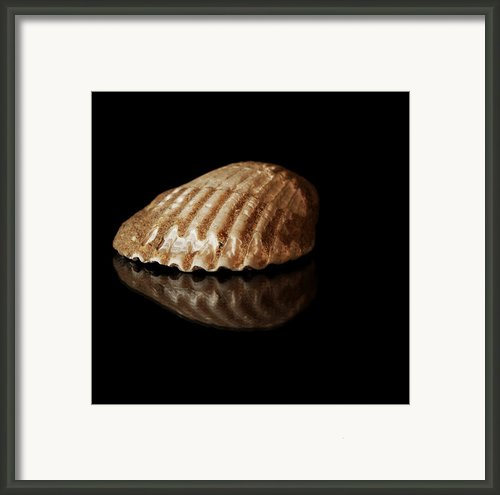 Clam Shell Framed Print By Tawnya Apuan