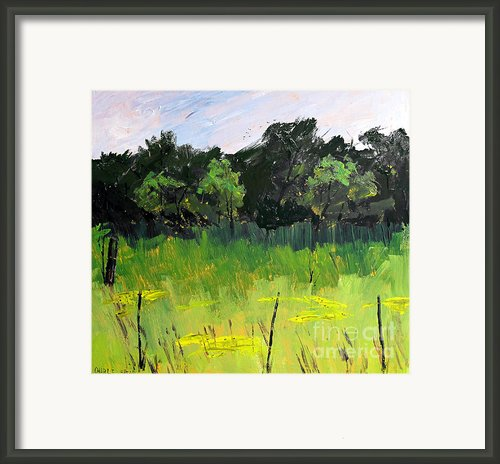 Clusters Of Black-eyed Susans Framed Print By Charlie Spear