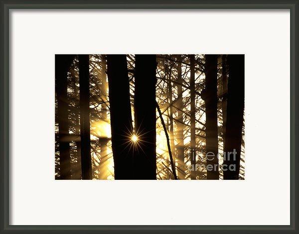 Coastal Forest Framed Print By Art Wolfe