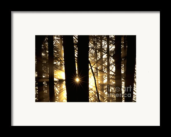 Coastal Forest Framed Print By Art Wolfe