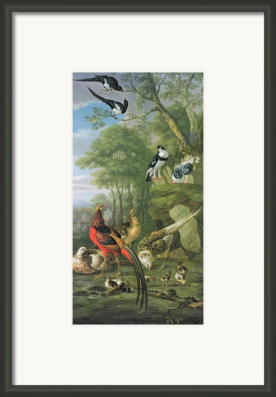 Cock Pheasant Hen Pheasant And Chicks And Other Birds In A Classical Landscape Framed Print By Pieter Casteels
