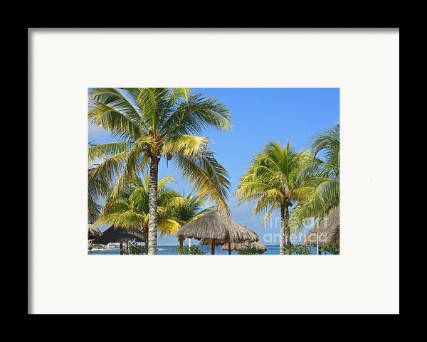 Coconut Palm Forest Framed Print By Charline Xia