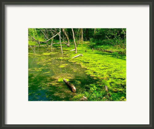 Colbert Creek Along Rock Spring Trail On Natchez Trace Parkway-al Framed Print By Ruth Hager