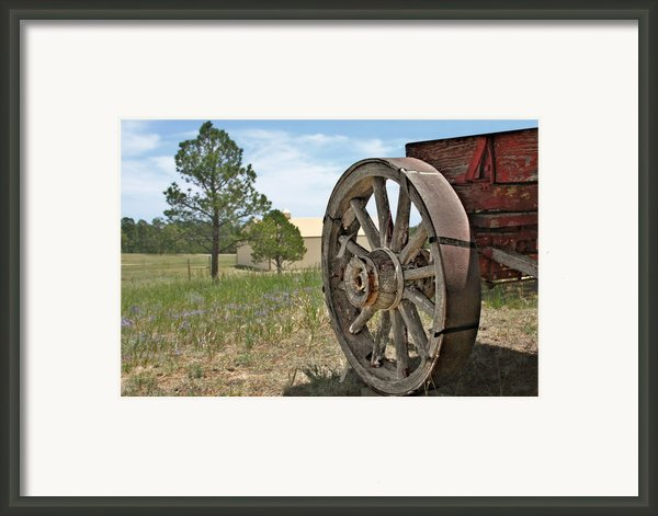 Colorado - Where The Columbines Grow Framed Print By Christine Till
