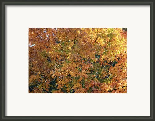 Colorful Autumn Framed Print By Laura Watts