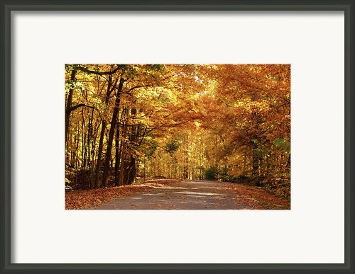 Colorful Canopy Framed Print By Sandy Keeton