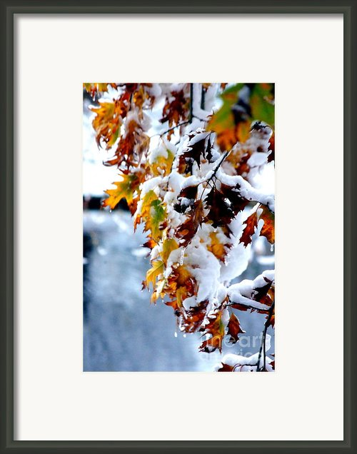 Colorful Colorado 12 Framed Print By Deniece Platt