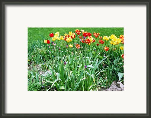 Colorful Spring Framed Print By Aimee L Maher