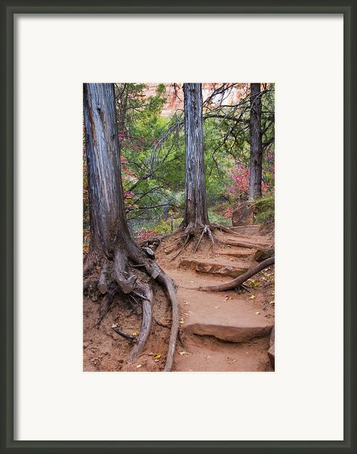 Colors Of Zion Framed Print By Adam Romanowicz