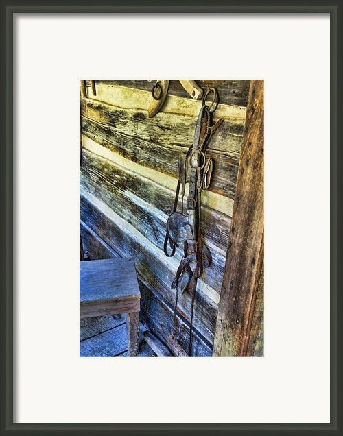 Comes With Blinders Framed Print By Jan Amiss Photography