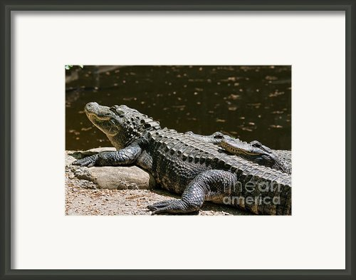 Comfy Cozy Framed Print By Lois Bryan