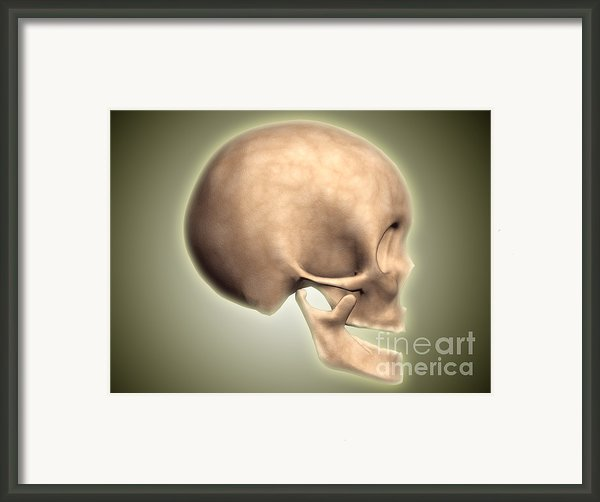 Conceptual Image Of Human Skull, Side Framed Print By Stocktrek Images