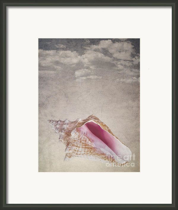 Conch Shell On Vintage Background Framed Print By Jane Rix
