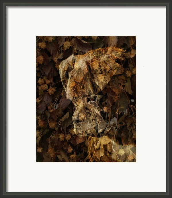 Contemplation Framed Print By Judy Wood