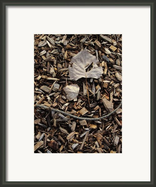 Content To Sleep Framed Print By Guy Ricketts