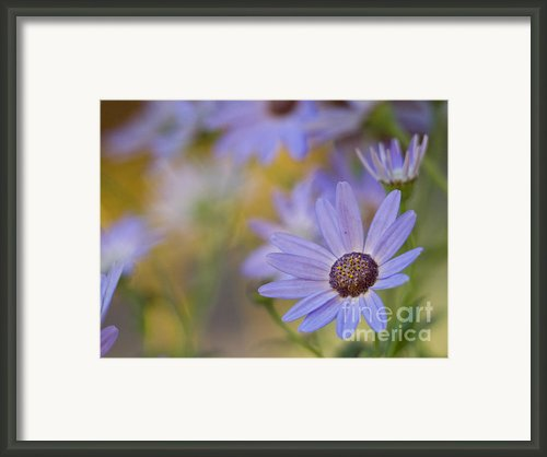 Cool Senetti Golden Dreams Framed Print By Dorothy Lee