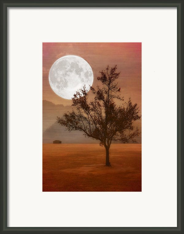 Copper Tree Framed Print By Tom York