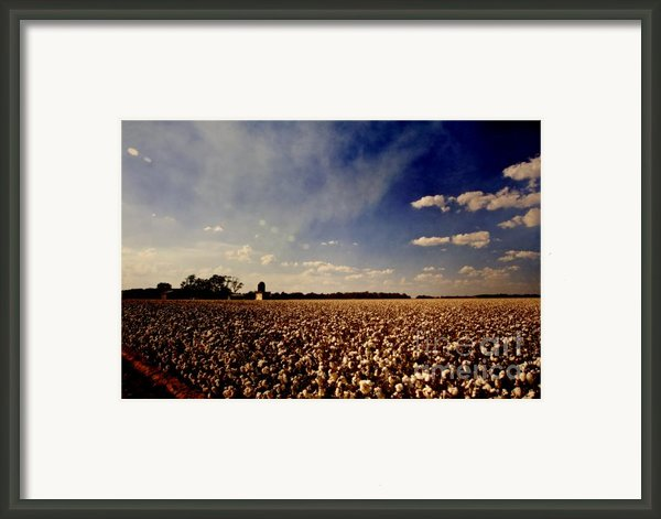 Cotton Field Framed Print By Scott Pellegrin