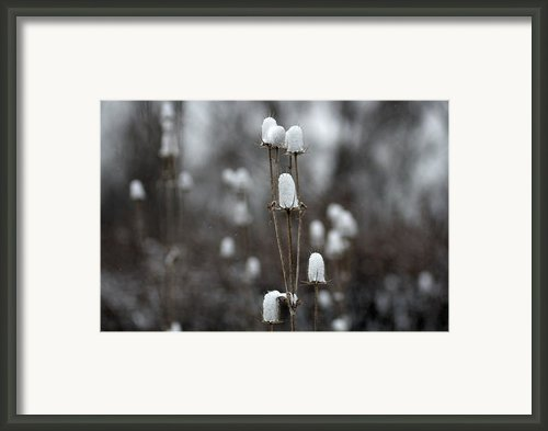 Cotton Tops Framed Print By Gothicolors And Crows