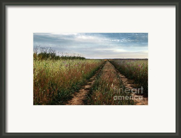 Countryside Tracks Framed Print By Carlos Caetano