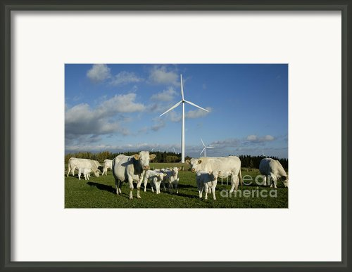 Cows And Windturbines Framed Print By Bernard Jaubert
