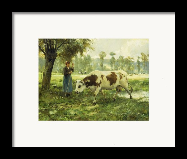 Cows At Pasture  Framed Print By Julien Dupre